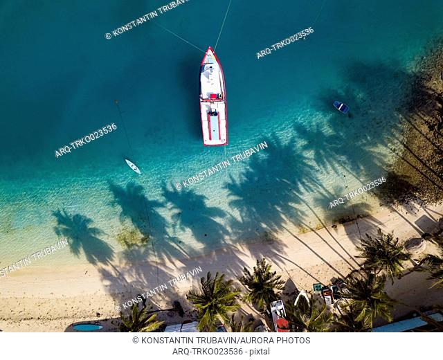 Aerial view of beach with palm trees,†Thulusdhoo, Male, Maldives