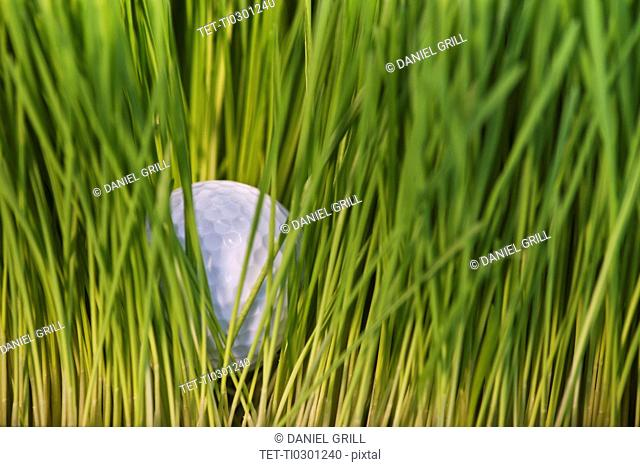 USA, New Jersey, Jersey City, Close-up view of golf ball in grass