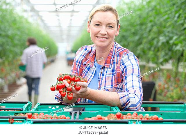 Portrait smiling grower holding ripe red vine tomatoes in crates in greenhouse