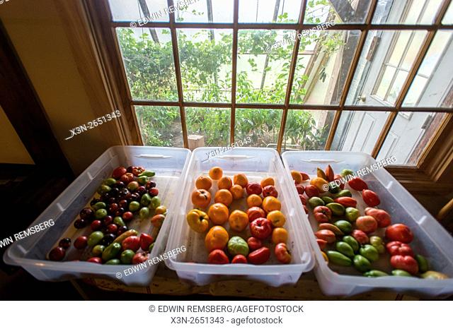 Bins of Fruits and Vegetables inside a farmhouse in Harrison, Maine