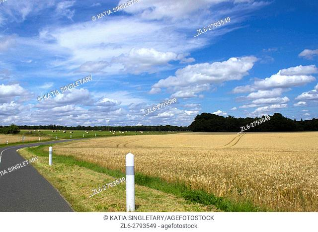 Road of Normandy, Northwest of France, about to sharply turn. Each side is adorned with wheat fields, green grass on a gorgeous sunny day and blue sky