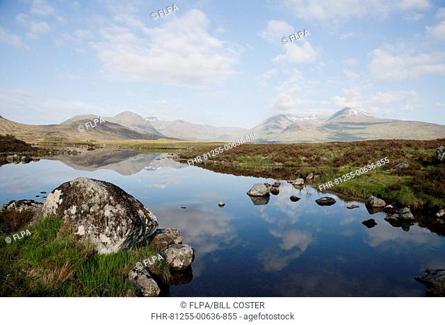 View of moorland landscape with mountains reflected in freshwater loch, Glencoe Mountains, Loch nah-Achlaise, Rannoch Moor, Grampians, Highlands, Scotland, June