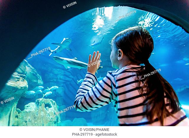 7 year-old girl watching fishes in an aquarium