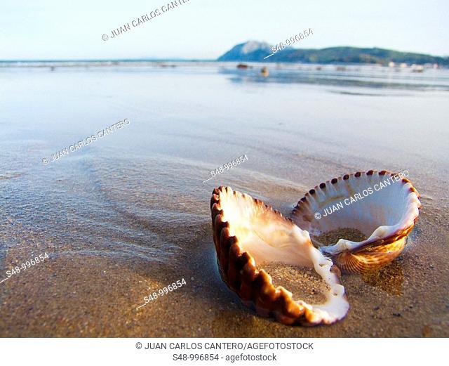 Laredo beach. Cantabria. España