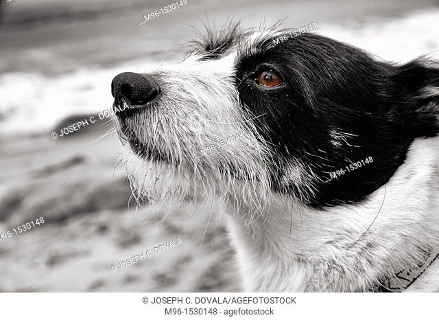 Mixed breed terrier closeup