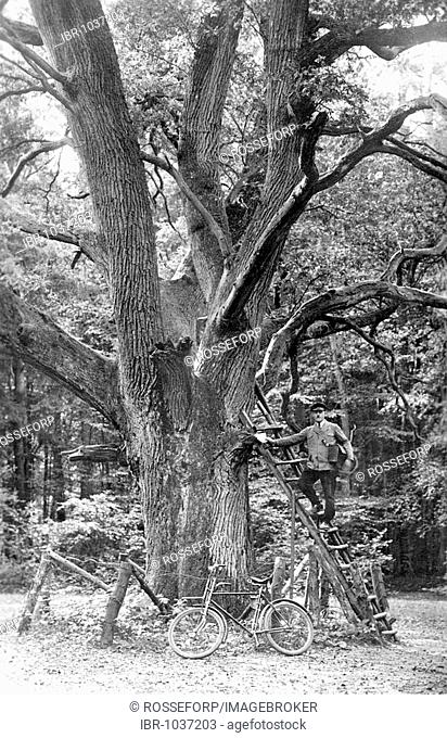 Historic photograph, postman posing in front of a large oak tree, around 1920