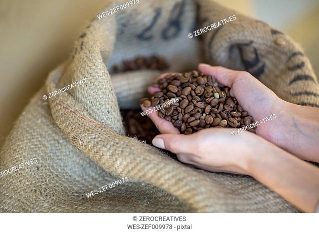 Coffee beans from sack in hands