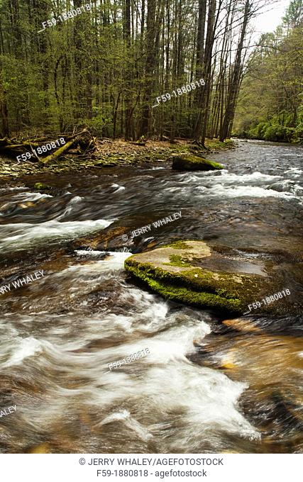 River, Pisgah National Forest, North Carolina