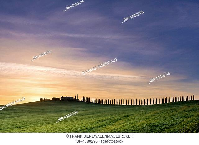 Typical green Tuscan landscape in Bagno Vignoni, Val d'Orcia with a farm on a hill, fields and cypresses at sunrise, San Quirico d'Orcia, Tuscany, Italy