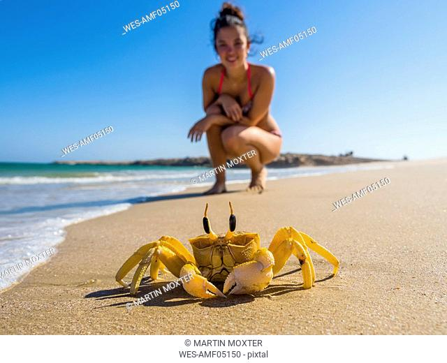 Oman, Ash Shirayjah, Ad Daffah, horned ghost crab on the beach with tourist in the background