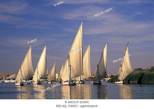 Sailing boats on river Nile Aswan Egypt felucca feluccas