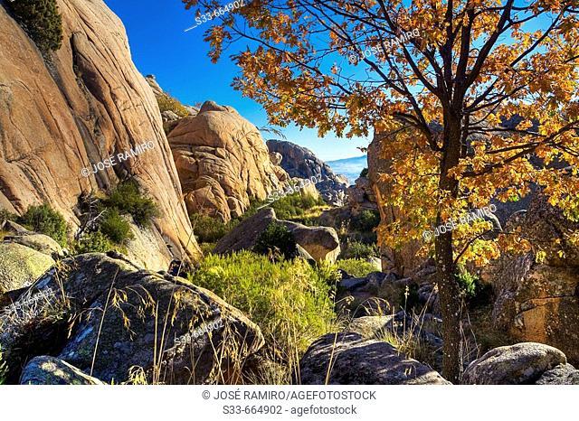 La Pedriza. Parque Regional de la Cuenca Alta del Manzanares. Sierra de Guadarrama. Madrid. España
