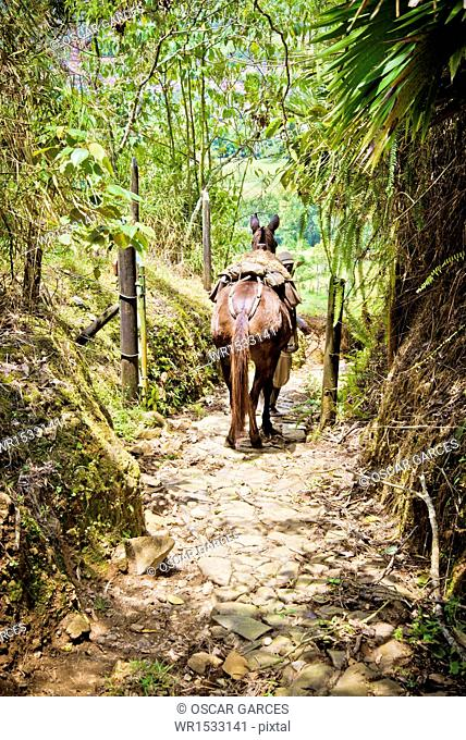 Horse in a Path Venecia, Antioquia, Colombia