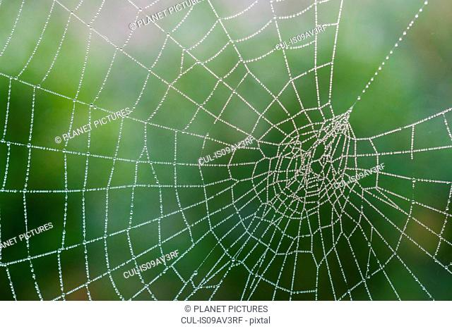 Spider's web, with dew, close-up