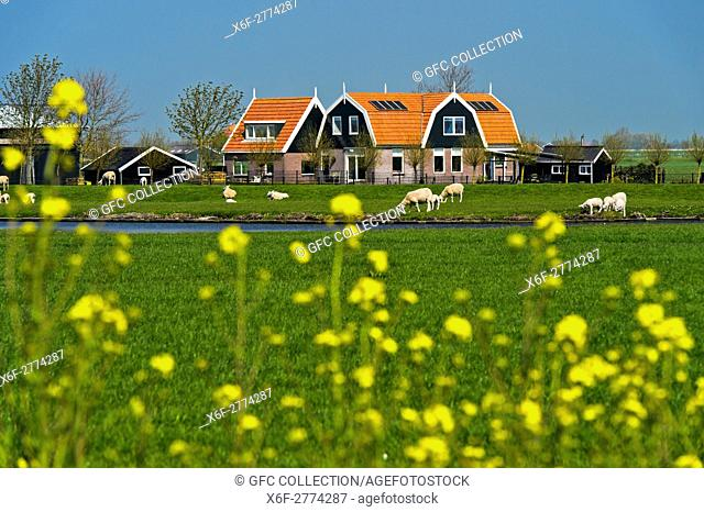 Farm house in the marshland, Beemster, Waterland Region, North Holland, Netherlands