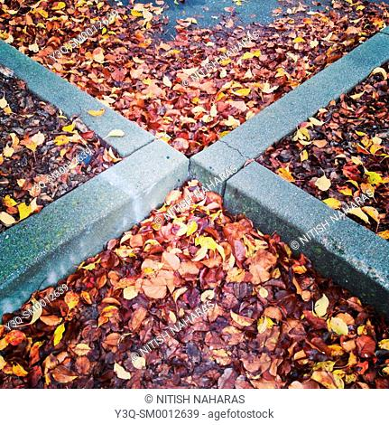The X-factor: Parking lot covered with fallen leaves