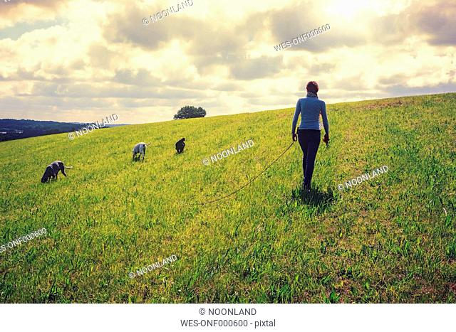 Germany, North Rhine-Westphalia, Rhein-Sieg-Kreis, Bergisches Land, Young woman with three dogs