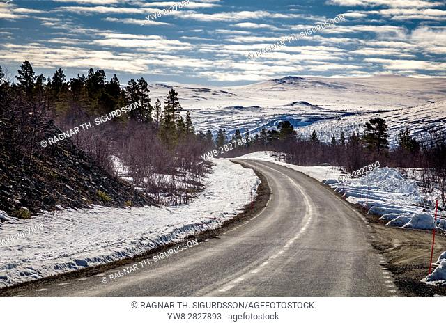 Empty road, Forest in Laponia Area, Stora Sjofallet National Park, Lapland, Sweden. World Heritage Area