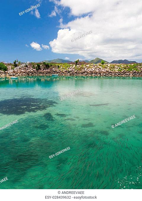 A large school of fish in the clear water of clean sea near the port of the island of La Digue and mountains in the distance, Seychelles