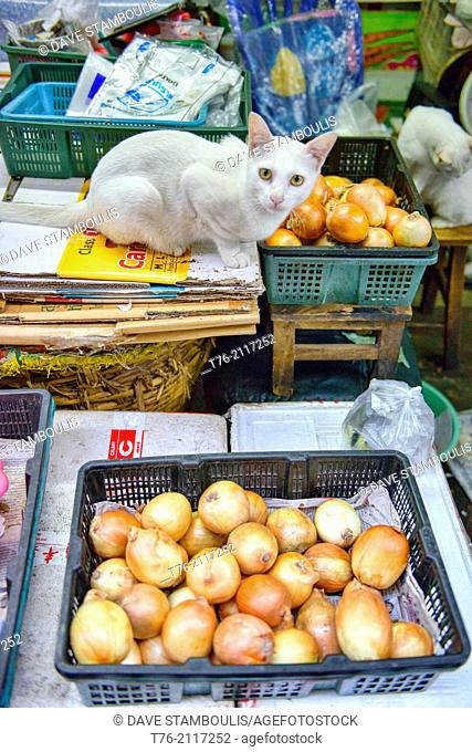 Cat and onions at the market in Chinatown in Bangkok, Thailand