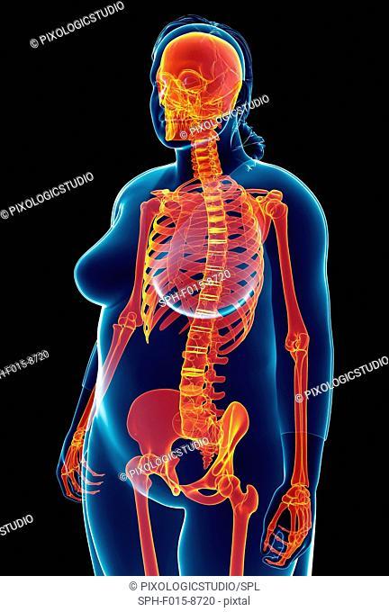 Illustration of female skeletal system