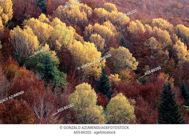 Irati woods. Pyrénées. Navarre. Spain