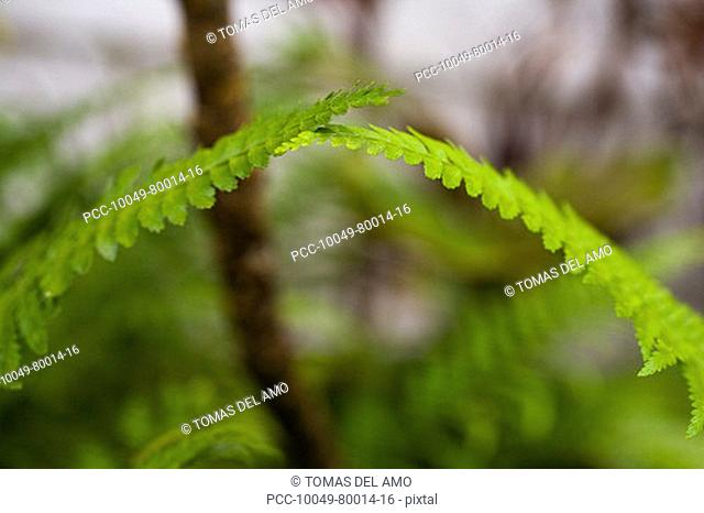 Close-up of bright green ferns brushing against each other at the top