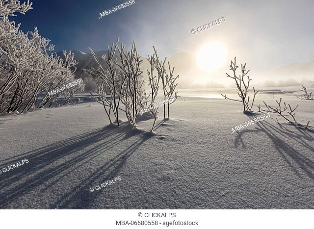 Winter landscape with trees covered in hoarfrost. Celerina, Engadin, Graubunden, Switzerland