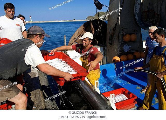 France, Pyrenees Orientales, Port Vendres, back from fishing