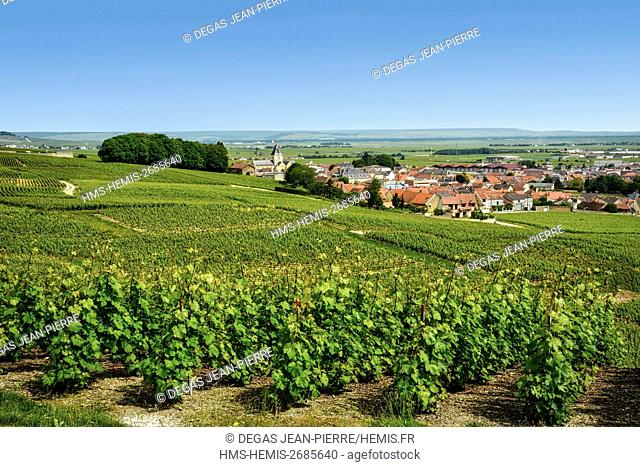 France, Marne, Le Mesnil sur Oger, Cote des Blancs, vineyard in champagne classified Premier Cru with a village in the background