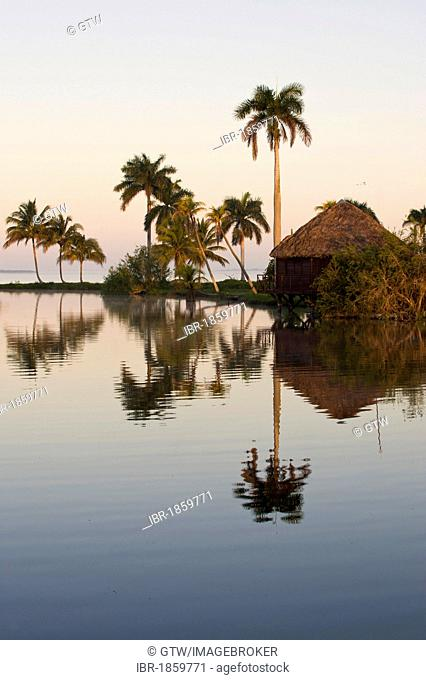 Laguna del Tesoro, Treasure Lagoon, palm trees and wooden cabins, Zapata Peninsula, Cuba, Central America