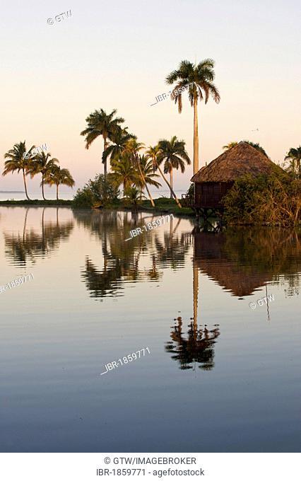 Laguna del Tesoro, Treasure Lagoon, palm trees and wooden cabins, Zapata Peninsula, Cuba, Central America