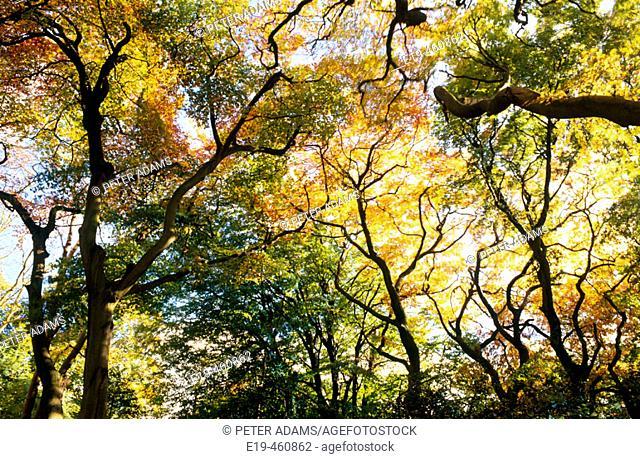 Autumn trees. Gloucestershire, England, UK