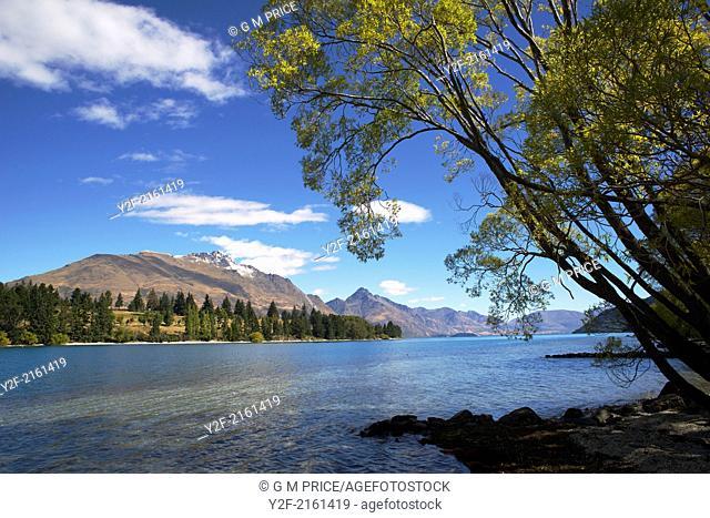 trees and mountains on the shore of Lake Wakatipu, New Zealand