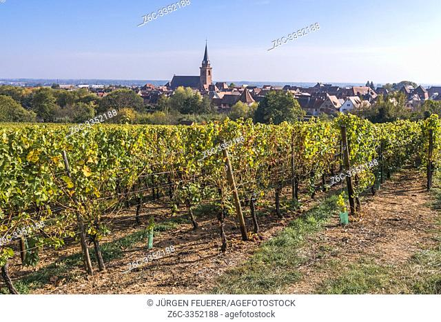 idyllic view of the village Bergheim, Alsace Wine Route, France, rural landscape with vines