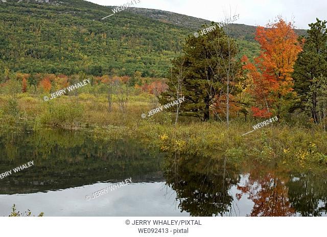 Autumn Color near Sieur de Monts, Acadia Nat  Park, ME