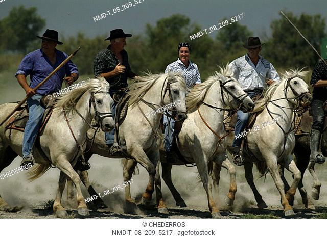 Five cattle ranchers on horse back, Provence, France