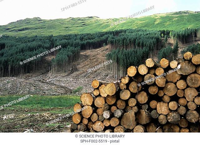 Deforested conifer plantation