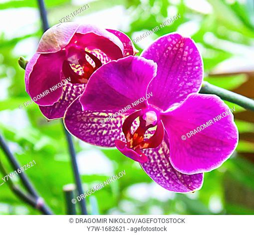 The branch of orchids in green background
