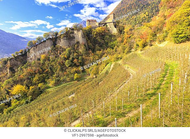 Tirolo Castle during autumn with apple orchards in the foreground, Merano, Sudtirol, Italy