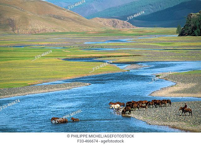 Rallying of horses drove. Orkhon valley. Övörkhangai province. Mongolia