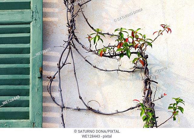 Plant climbing wall
