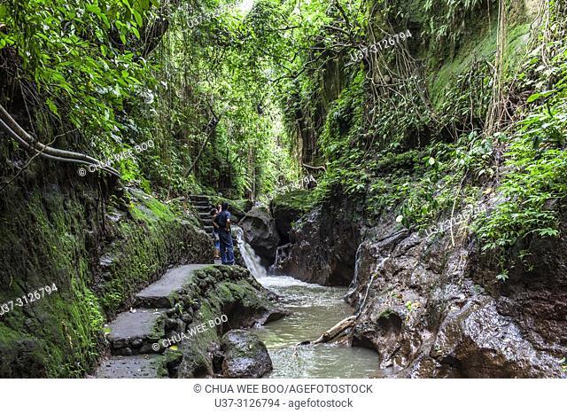 Sacred monkey forest sanctuary, Padangtegal, Ubud, Bali