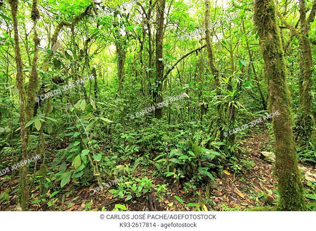 Selva del Parque Nacional Volcan Tenorio, Costa Rica