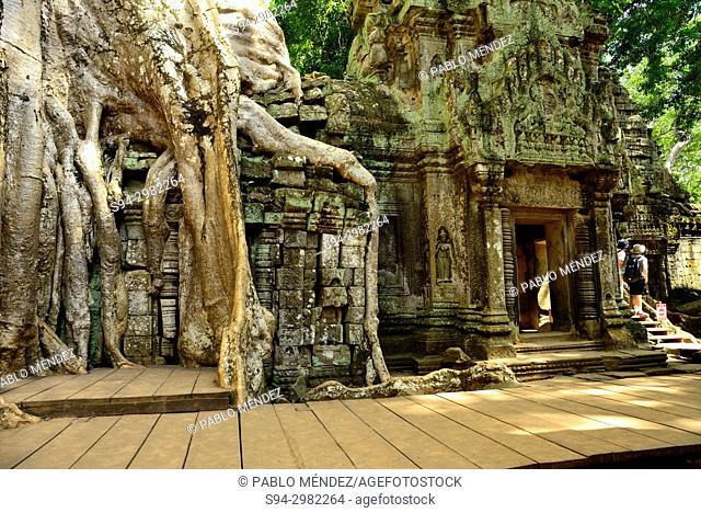 Ta Prohm temple, Angkor area, Siem Reap, Cambodia