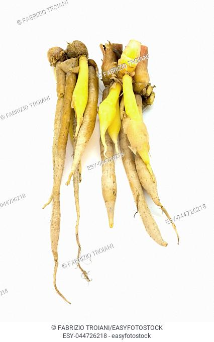 Thai galangal on a white backround