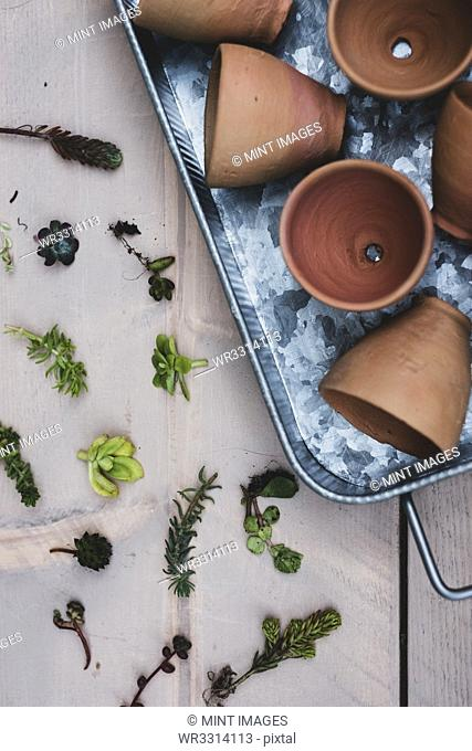 High angle close up of selection of small succulents and terracotta pots on metal tray