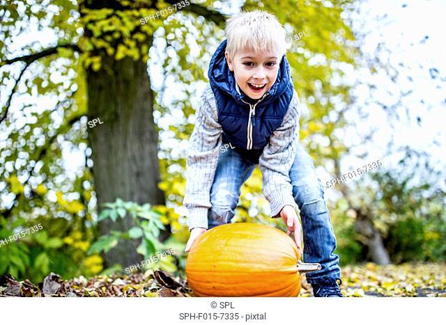 MODEL RELEASED. Boy picking Halloween pumpkin