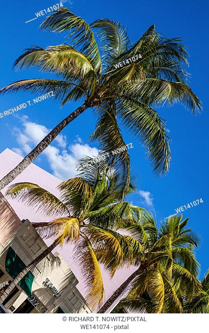 Spanish revival architecture and Palm trees along Worth Avenue in Palm Beach, Florida