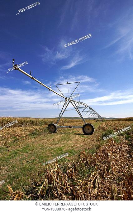 Irrigation on a corn field  LLeida  Spain